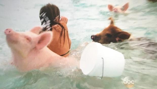 jojo pig island