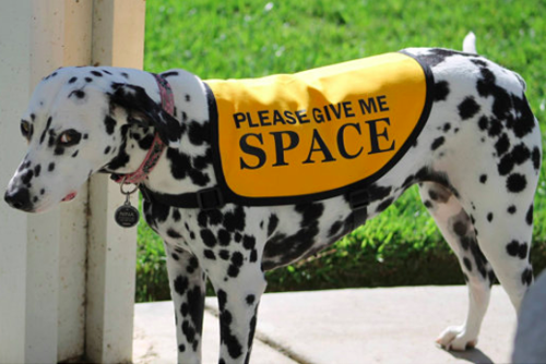 give me space dalmatian