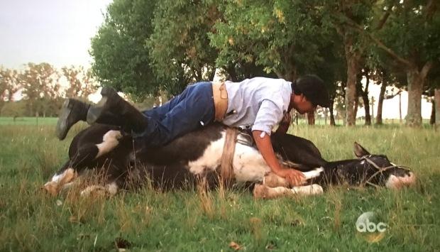 horse bachelorette