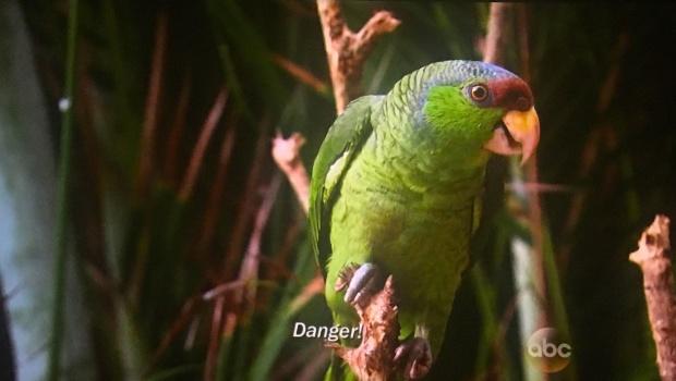 parrot danger bachelor in paradise