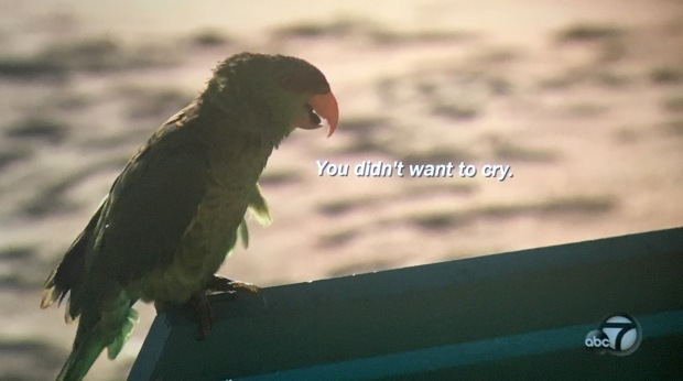parrot didn't want to cry