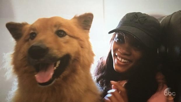 rachel's dog copper leg cast bachelorette.JPG