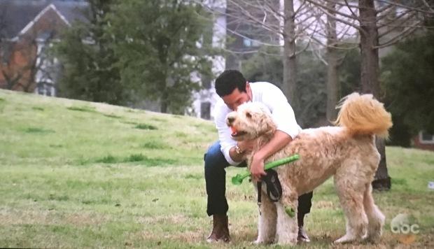 second dog.JPG