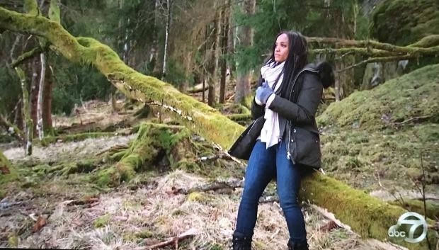 moss rachel tree.JPG