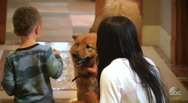 copper rachel dog.JPG
