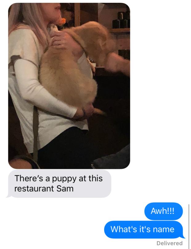 puppy at the restaurant